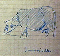 A Cow at Santrouville